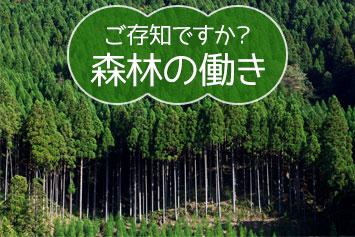 森林の大切な働きについて